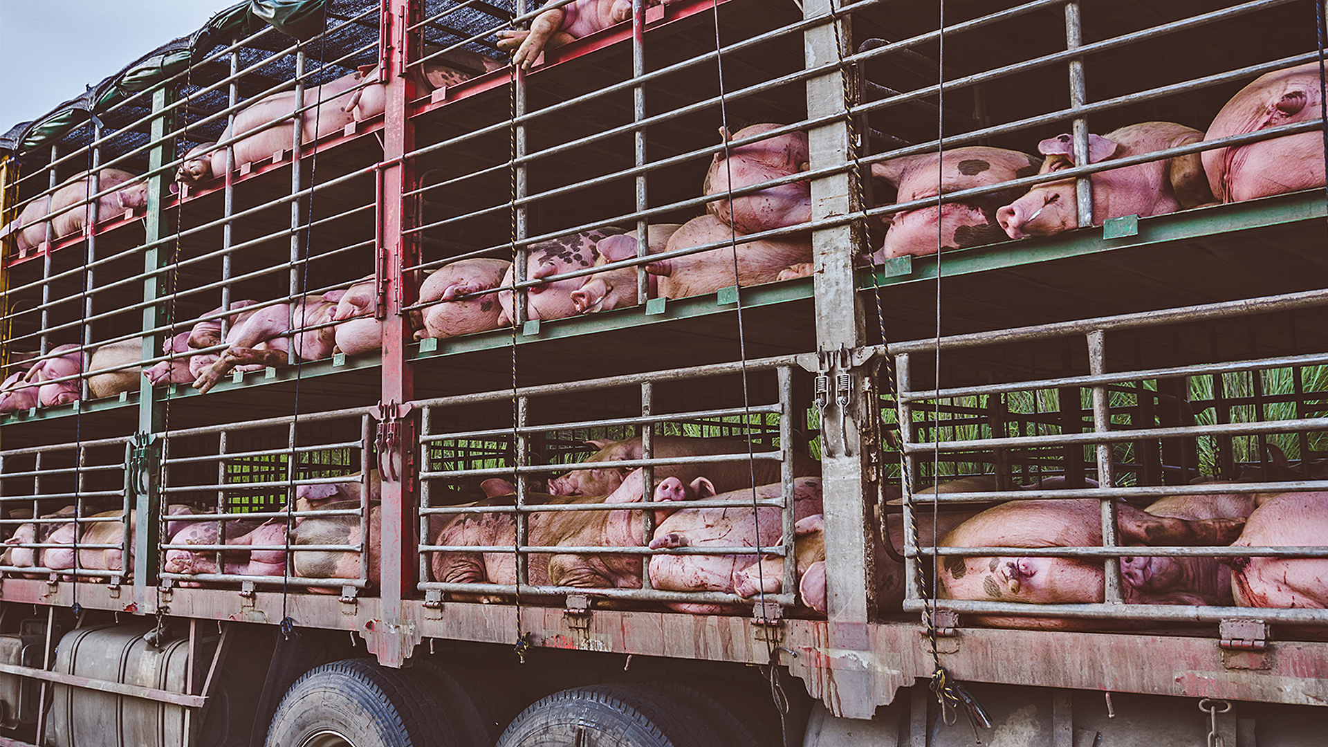 Tiertransporte unter Kontrolle bekommen