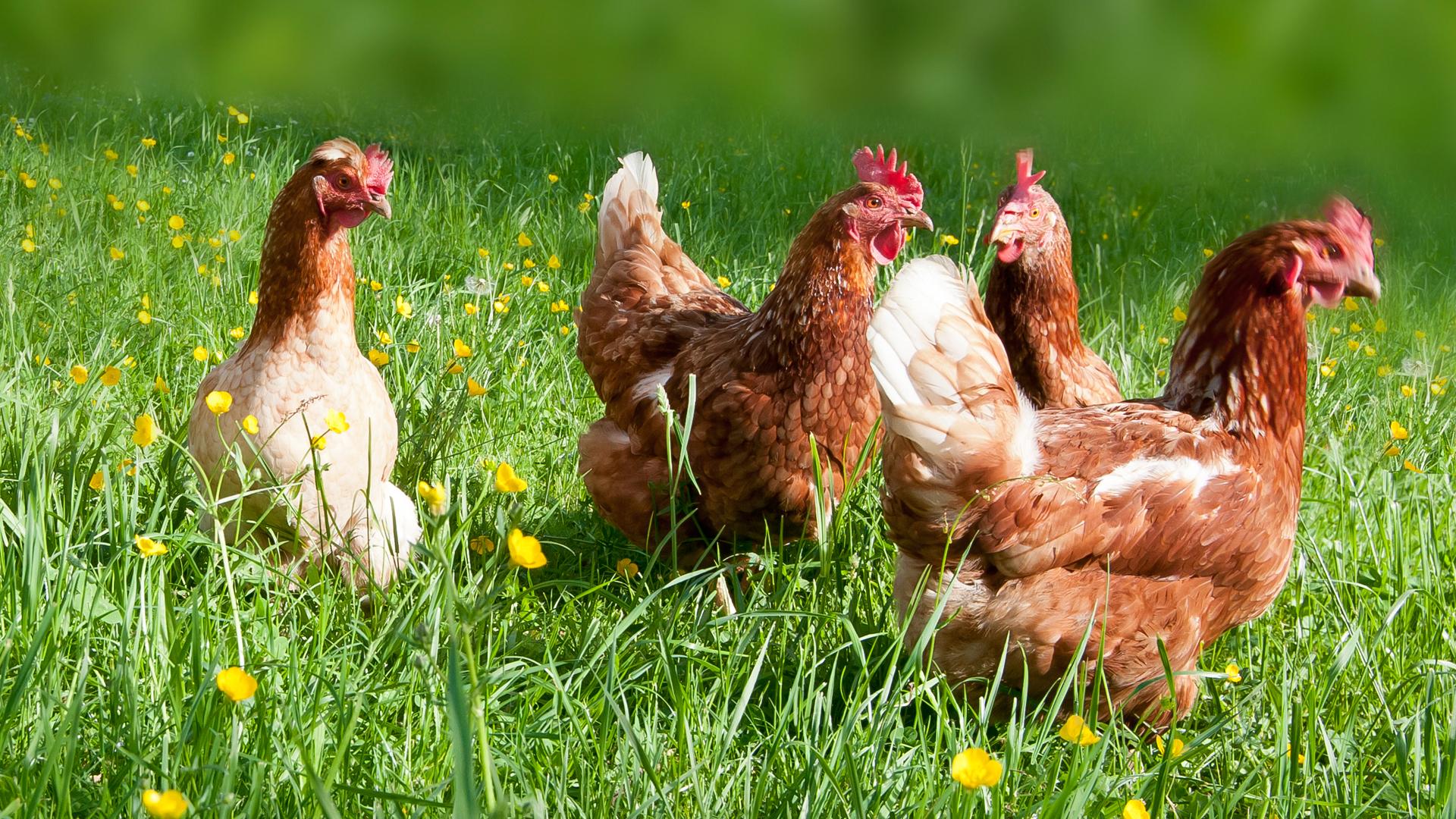 Für gesunde Ernährung und umweltfreundliche Landwirtschaft
